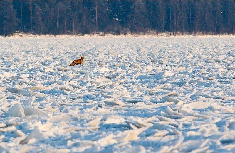 Ниласовые льды: Блинчатый лед (Pancake ice)