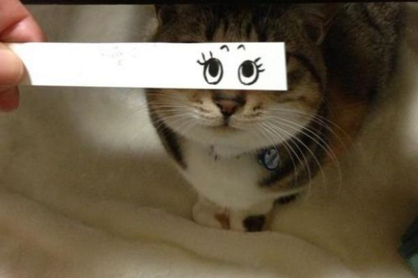 Веселый кото-монтаж (catmontage)