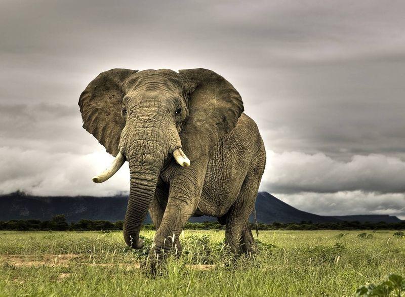 Интеллектуалы мира животных