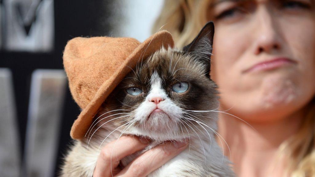 Сколько зарабатывают самые популярные животные в интернете