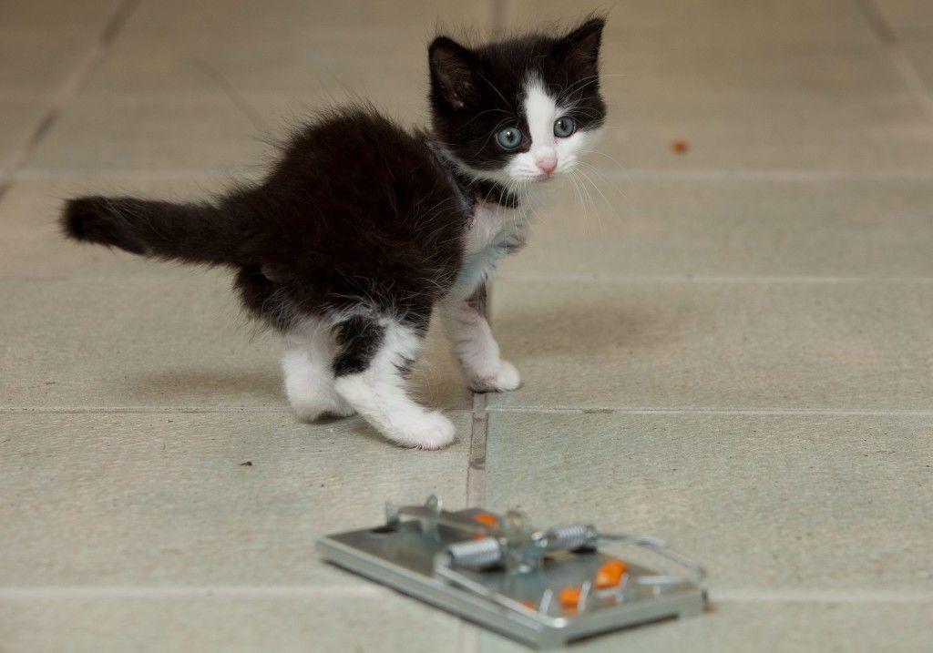 Котенок, потерявший лапку в мышеловке, нашел новый дом... и все еще любит сыр