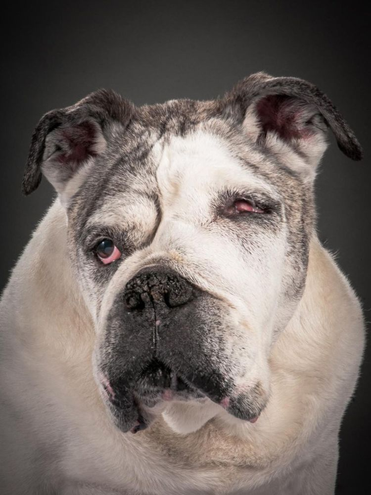 Стареющие собаки в фотопроекте Старый верный (Old Faithful)