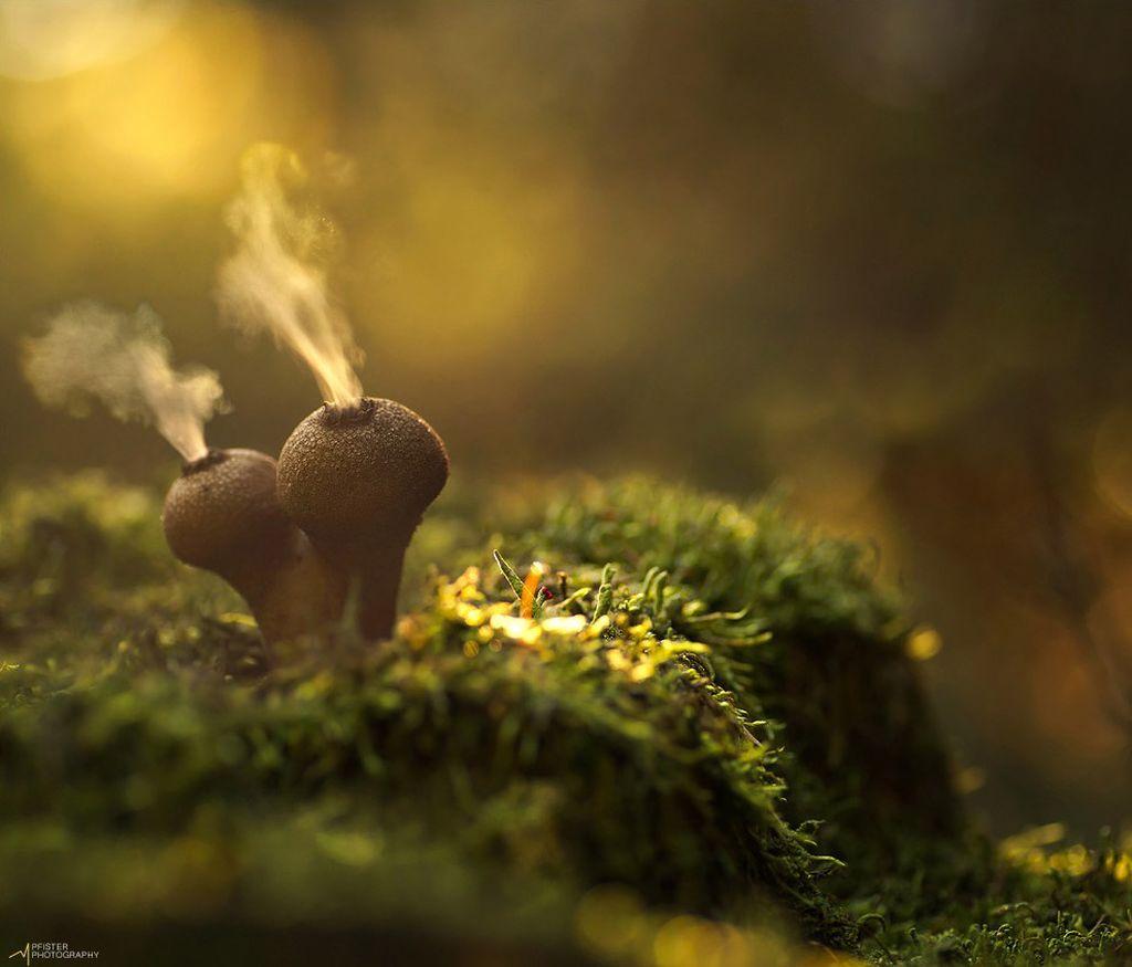 Добро пожаловать в мир грибов.
