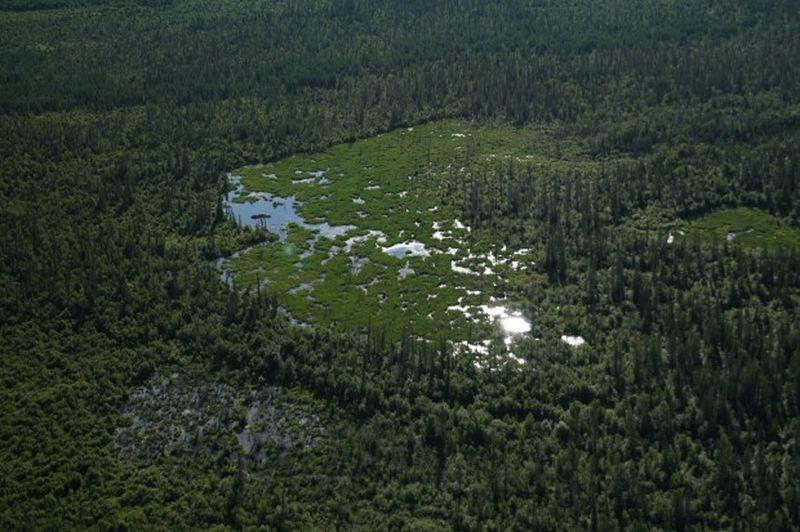 Самая большая  бобровая плотина в мире