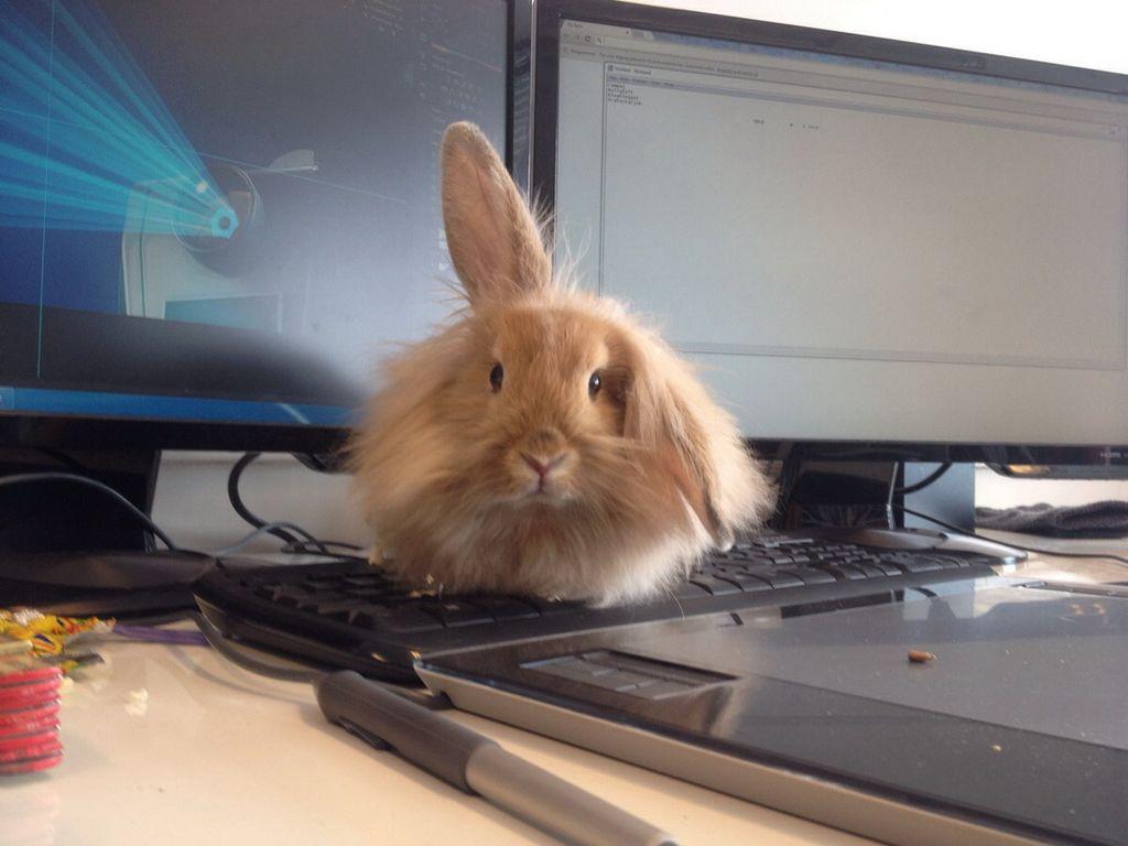 Фото смешные крольчата