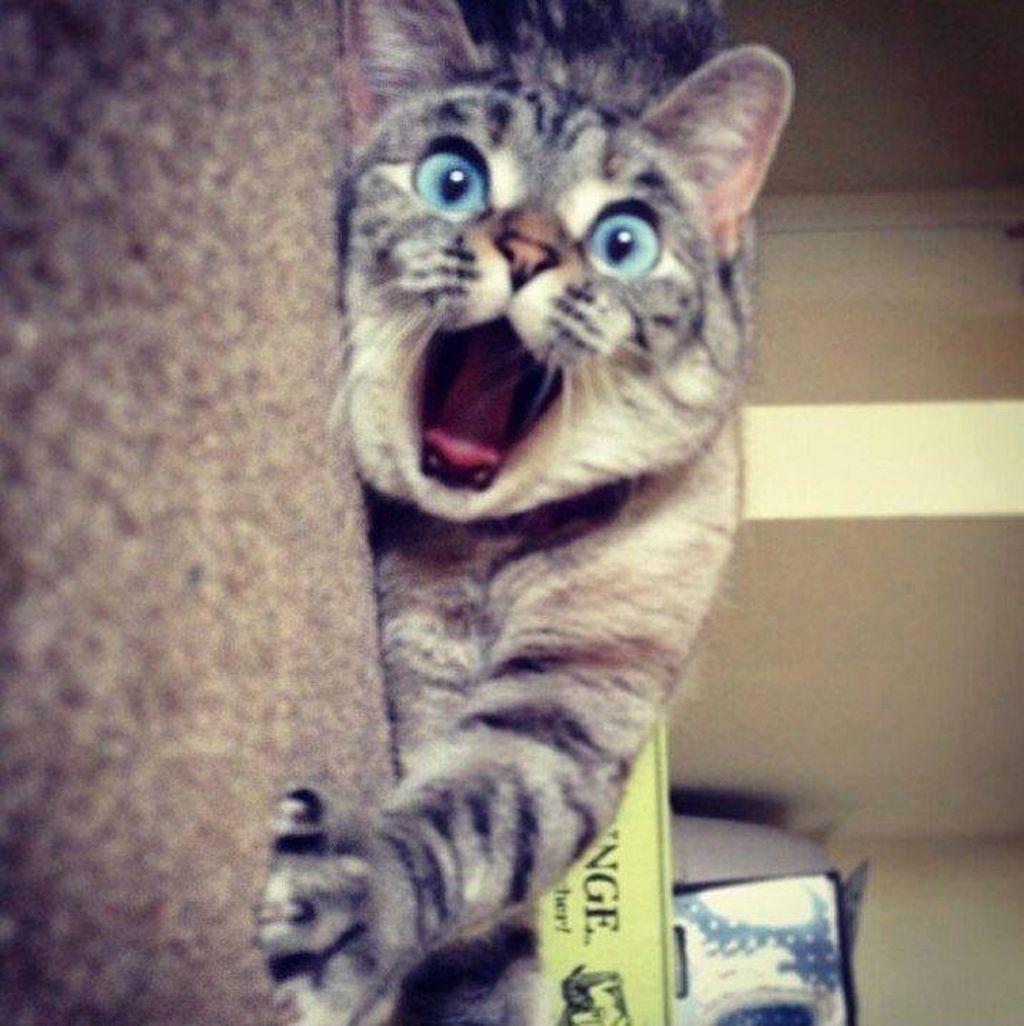 фото забавные кошек