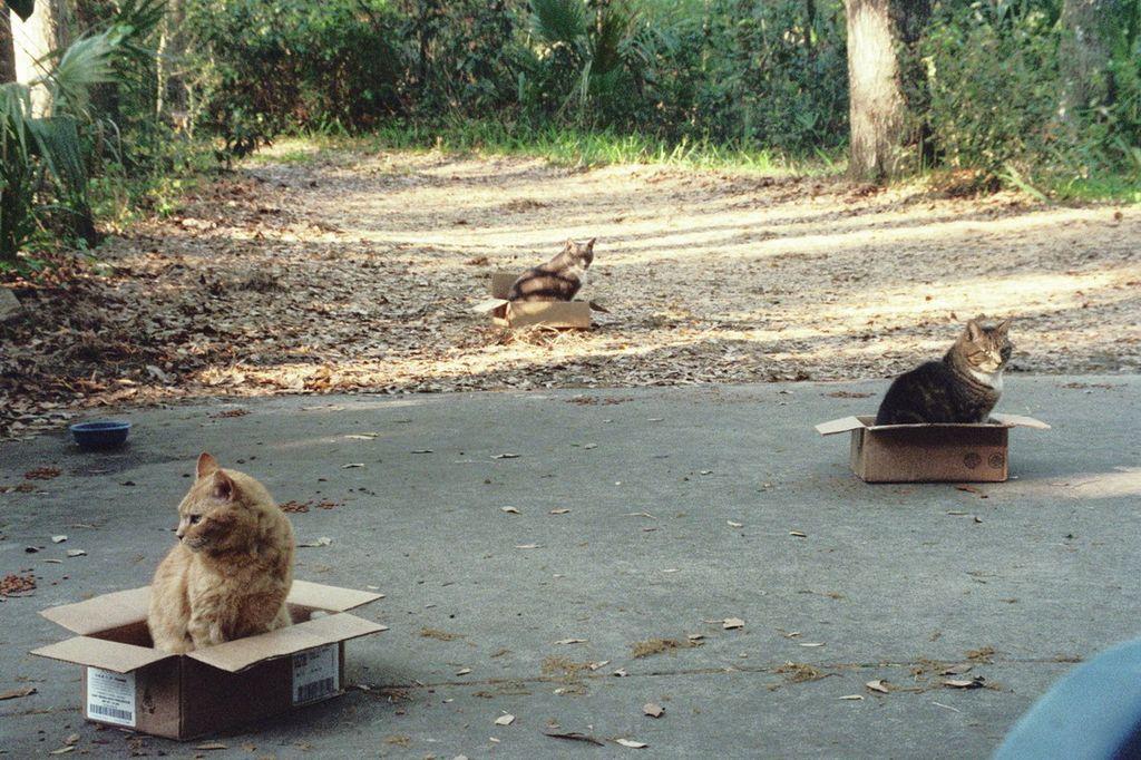 Кошеловка для кошек