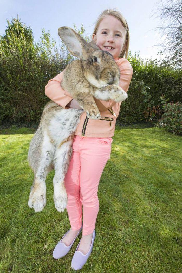 Фотографии самого большого кролика в мире взорвали Интернет