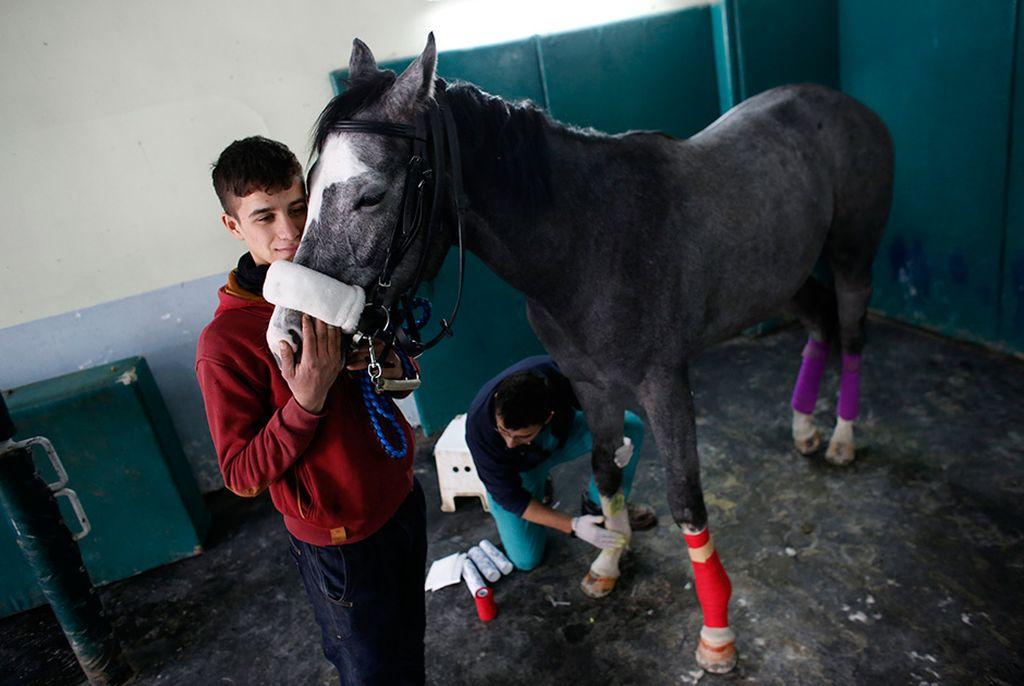 Непростые будни ветбольницы для лошадей