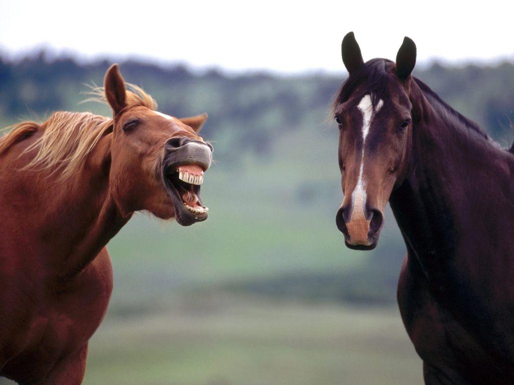 Картинки по запросу Эмоции этих животных