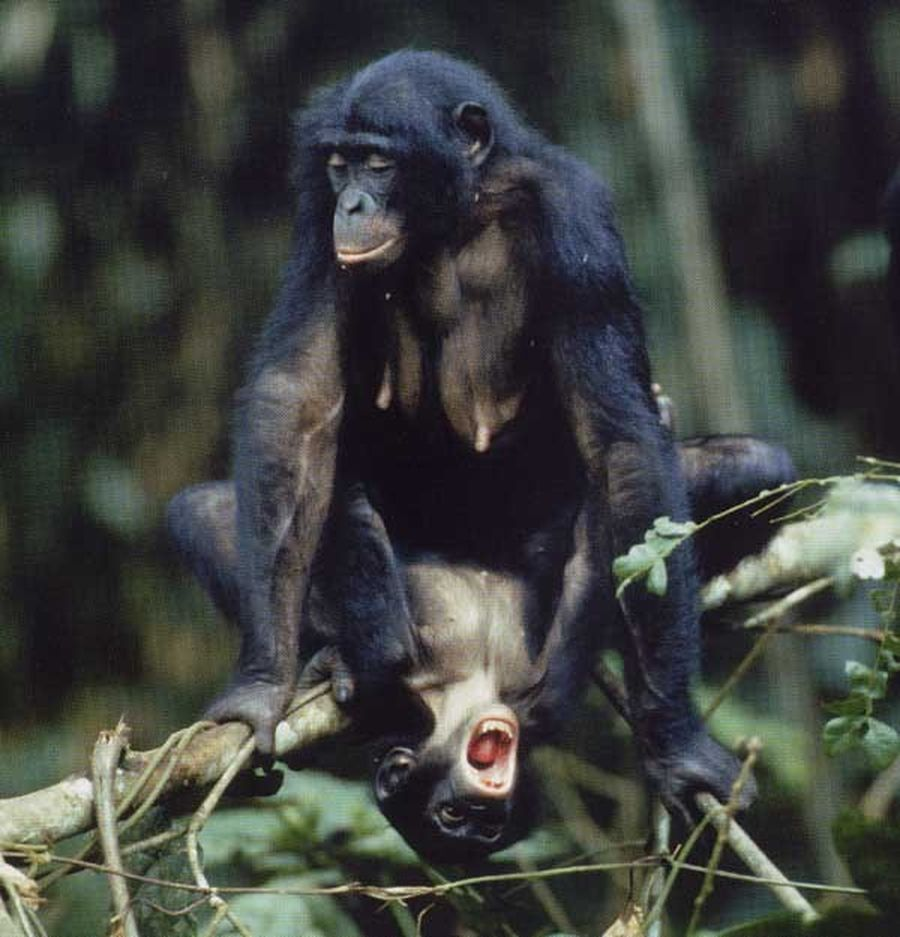 Секс с обезьянам 151