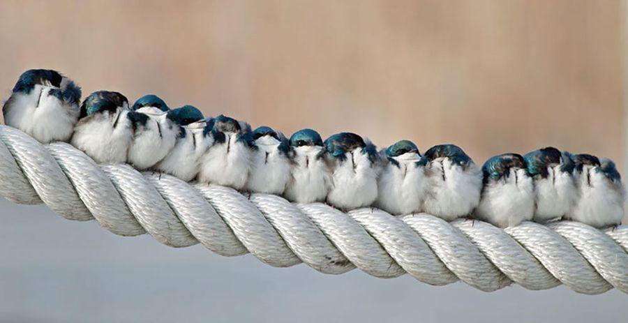 Как птички согреваются в холод