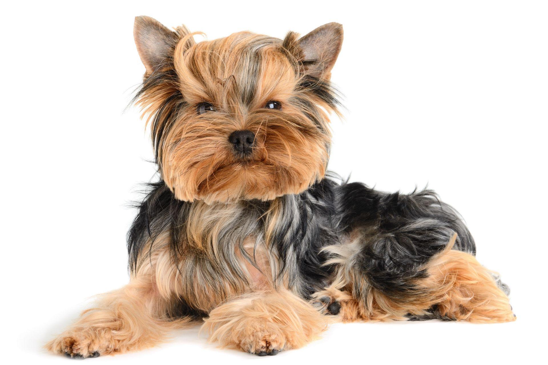 Обои на рабочий стол: собаки