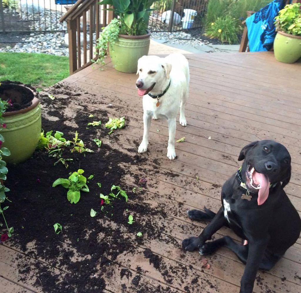 Как не совершить ошибок в обучении собаки