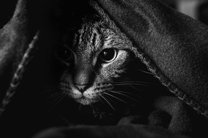 Картинки по запросу Кошки у окна в фотографиях Felicity Berkleef