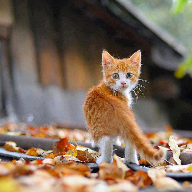 Картинки с милыми котятами картинки