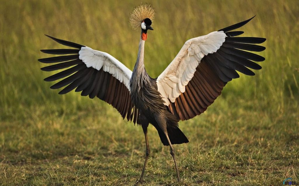Десять самых красивых птиц нашей планеты