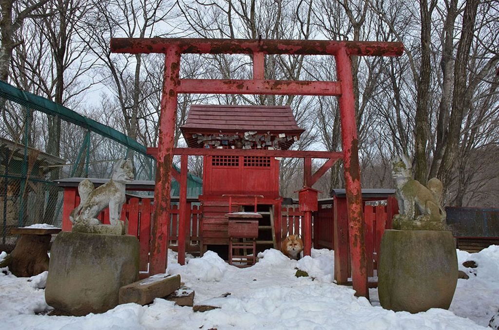 Японская деревня лис