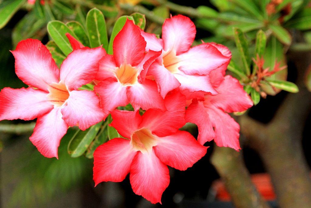 Цветы, которые могут нарведить вашему здоровью