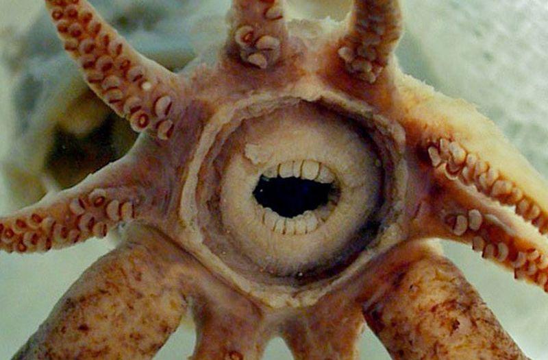 10 подводных существ с ужасающими зубами