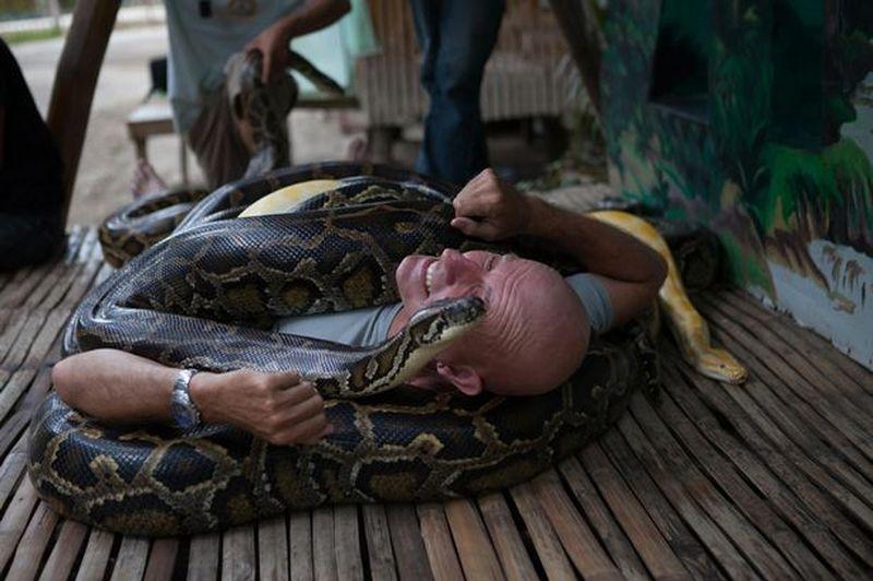 Посетителям зоопарка сделают массаж пятиметровые питоны