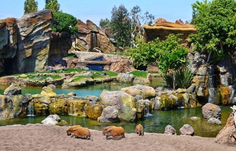 Необычный Биопарк в Валенсии