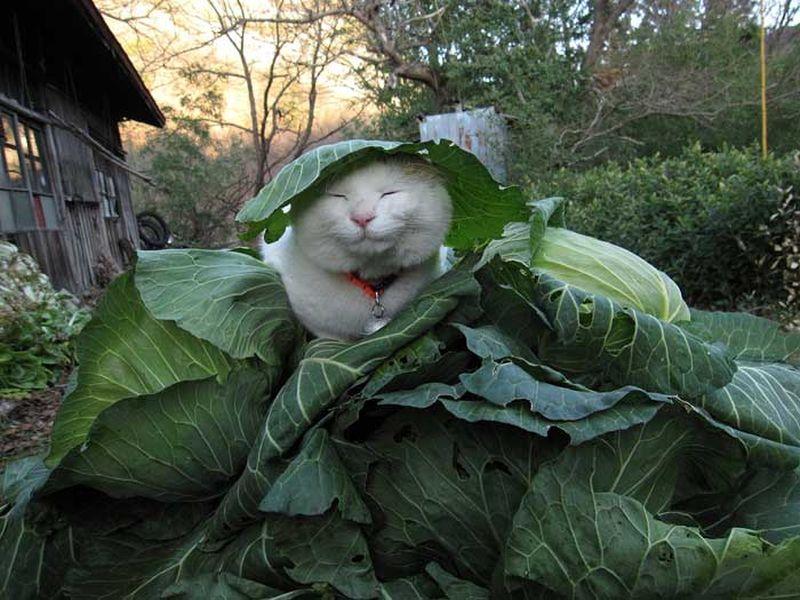 Кот Shiro Neko - само спокойствие