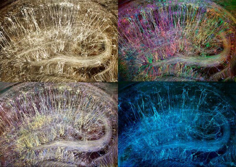 Эстетика и изысканность человеческого мозга в искусстве Грега Данна