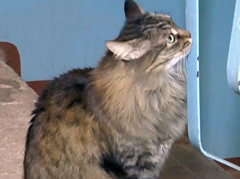 Кошка из Обнинска спасла брошенного младенца