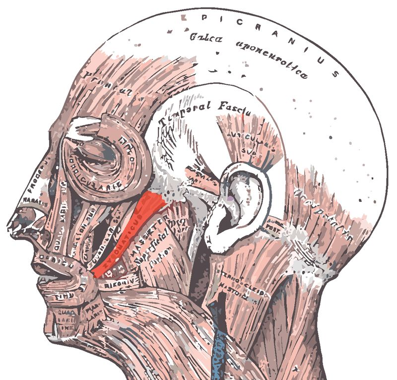 Рудиментарные органы человека