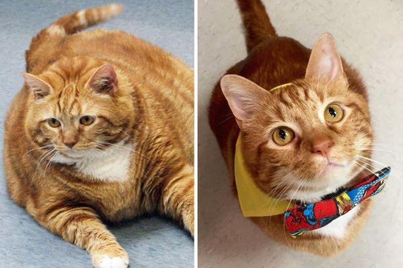 Смотреть Кот по кличке Тощий похудел на 10 кг за три года видео