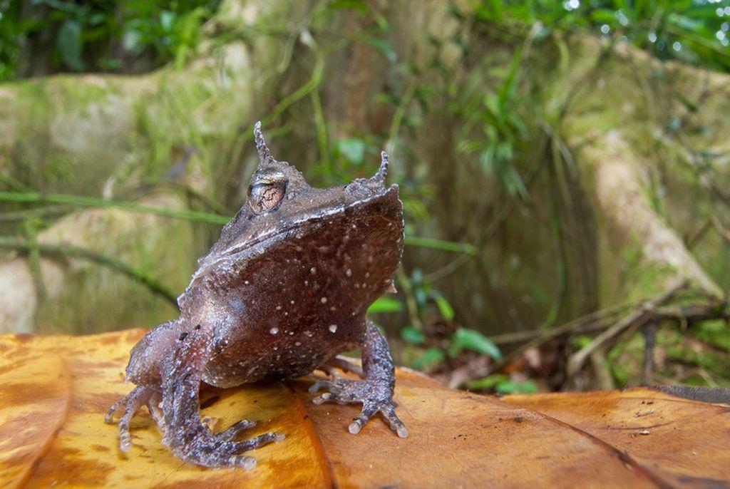 Самые редкие и красивые лягушки