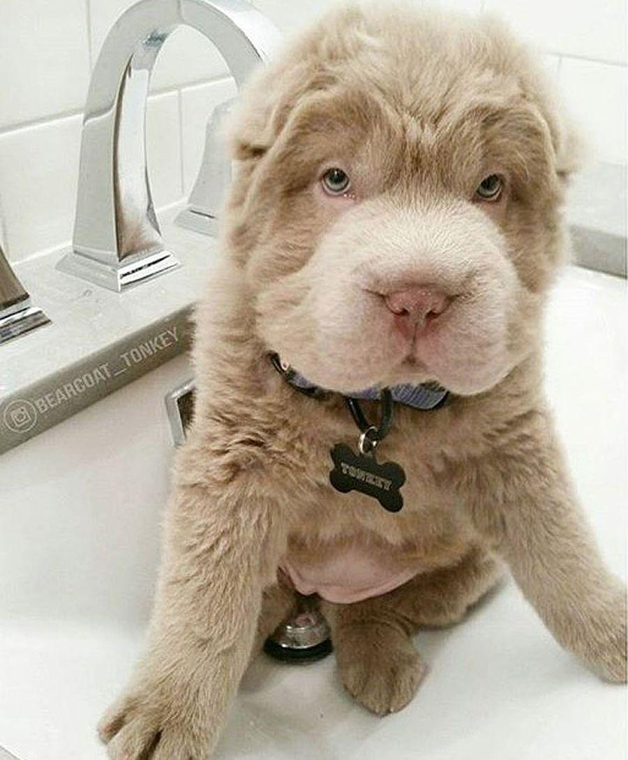 Плюшевый щенок по кличке Тонки