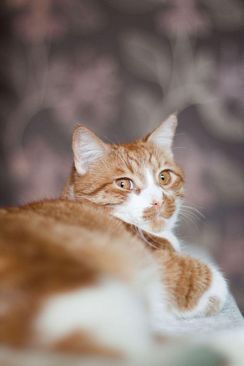 Акварелные картины необычных кошек