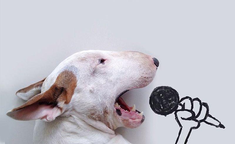 Самые богатые животные-блогеры