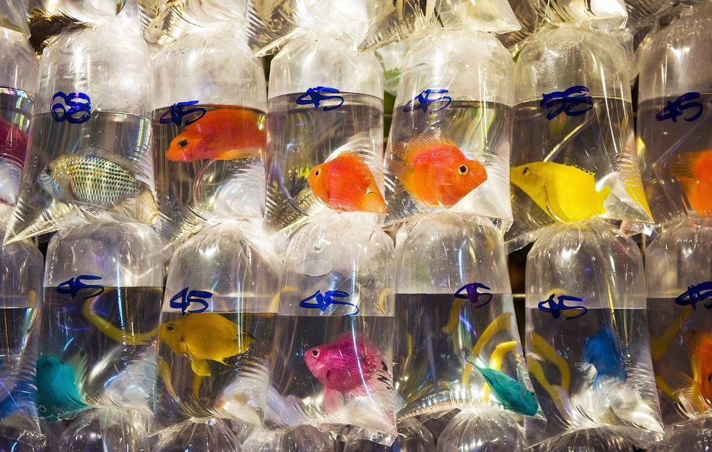 Золотые рыбки на рынке Гонконга