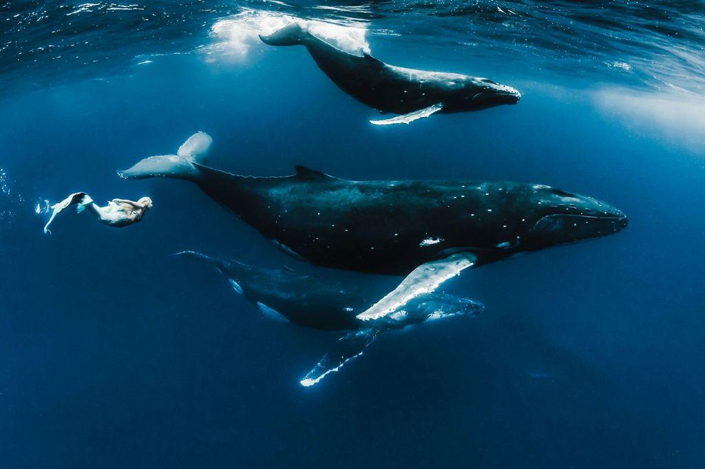 Подводные танцы с китами