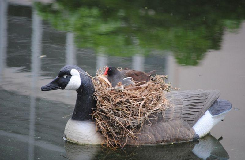фото птиц мульти