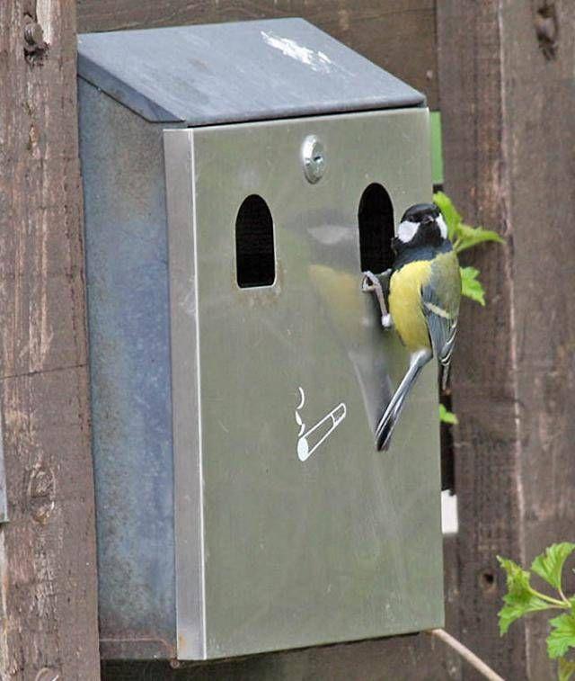 Неожиданные места, где были обнаружены гнезда птиц