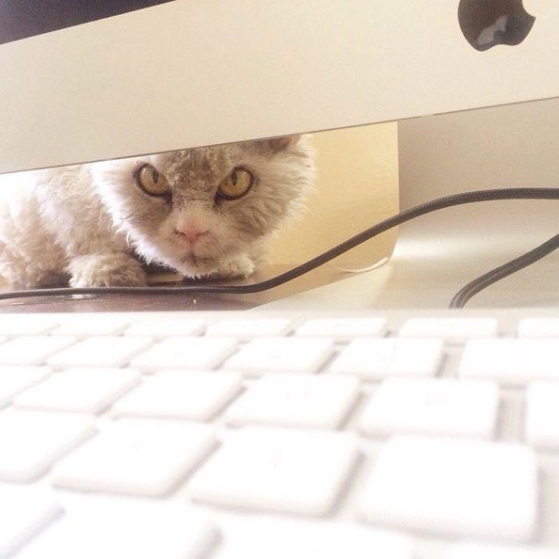 Овце-кот с синдромом стервозного лица
