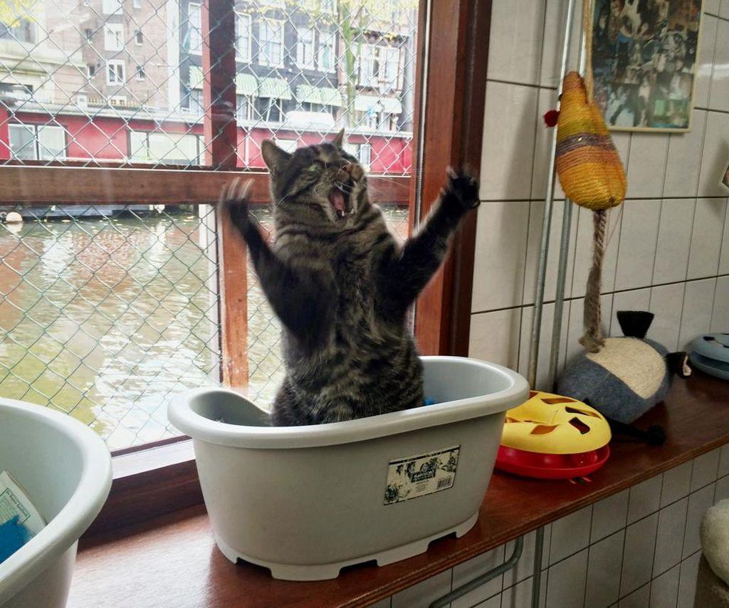 Приколы фото кошки 19 фотография