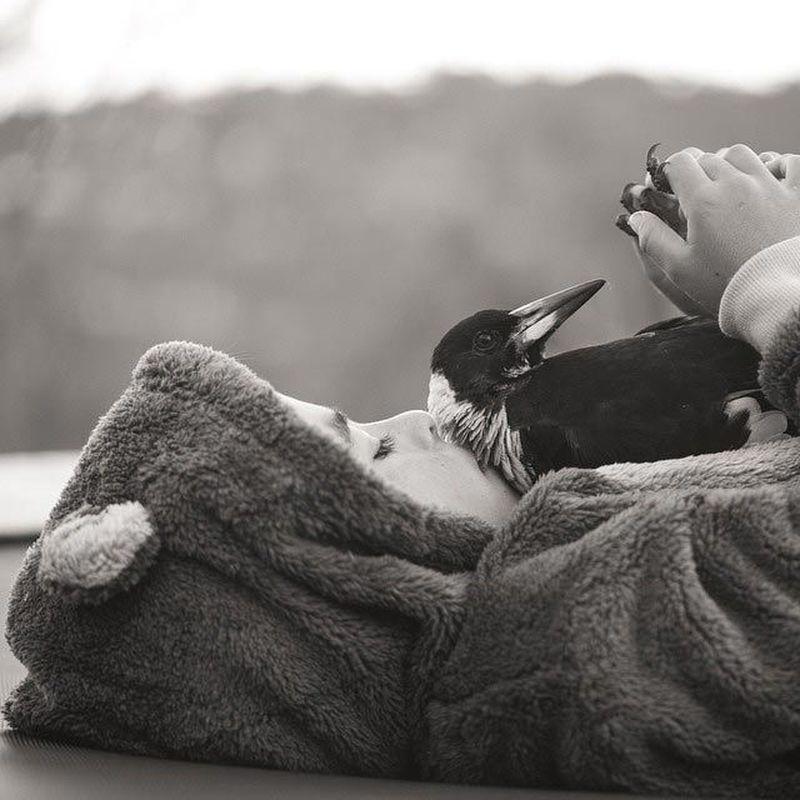 Ручная сорока по кличке Пингвин - настоящий домашний любимец