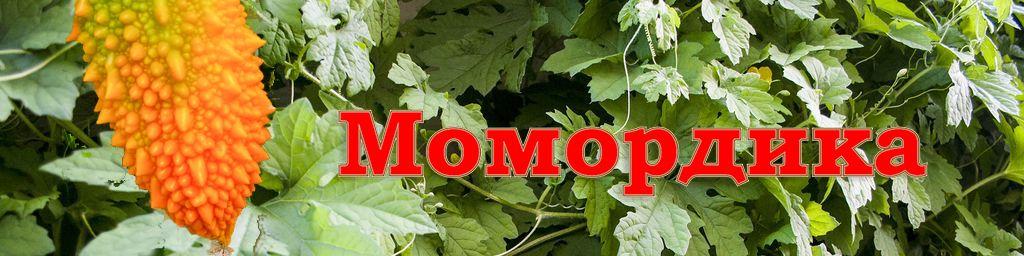 Момордика (лат. Momordica)