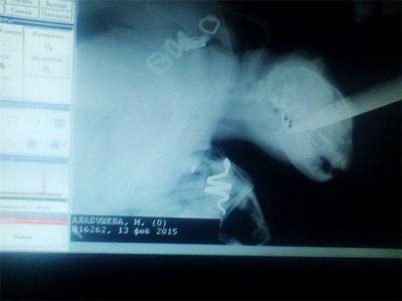 В Крыму ветеринары спасли кота, которого ударили ножом в голову