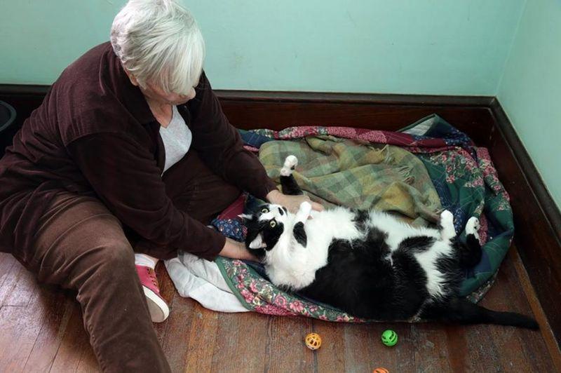 15-килограммовая кошка ищет новых хозяев
