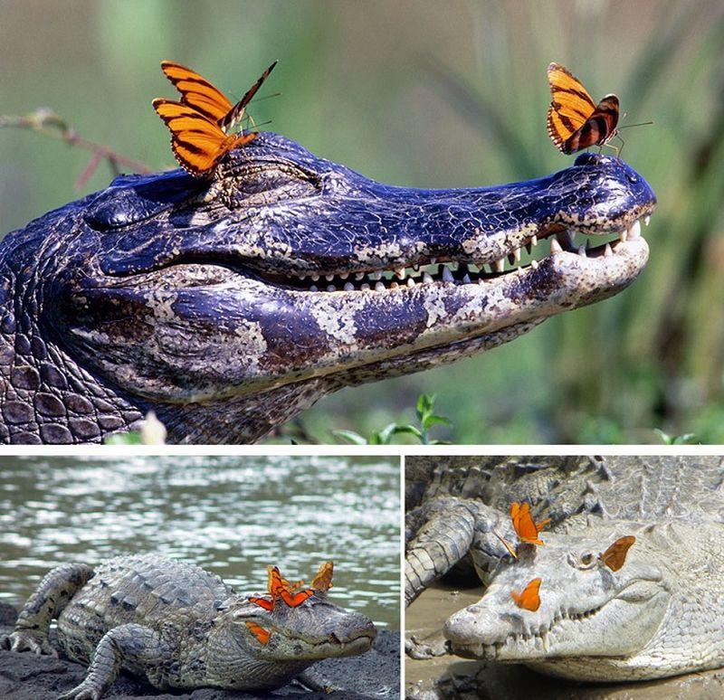 Романтичные фотографии животных с бабочками на носу