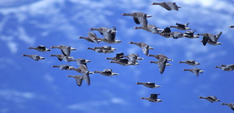 Ученые узнали, как птицы