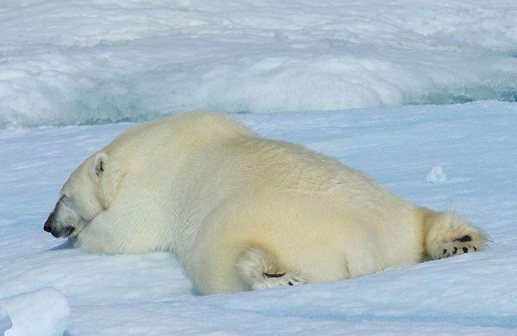 Жизнь на кромке льда