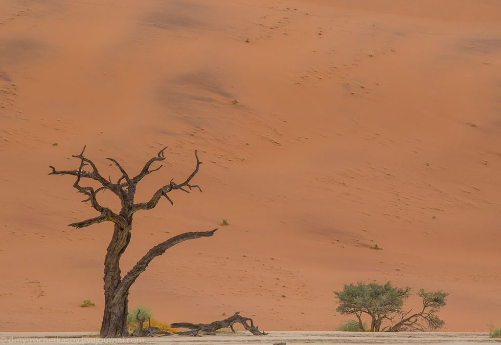Путешетвие в самое сердце пустыни Намиб