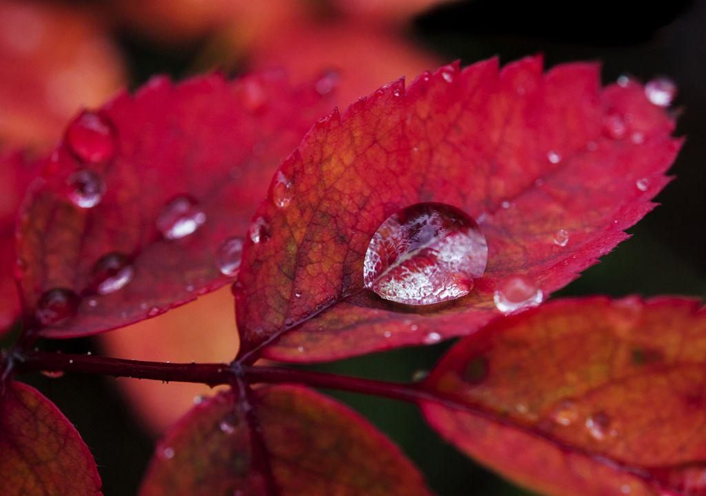 Осень в парке Денали